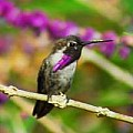 Wonderful World of Hummingbirds - 3 Per Day - Art Group